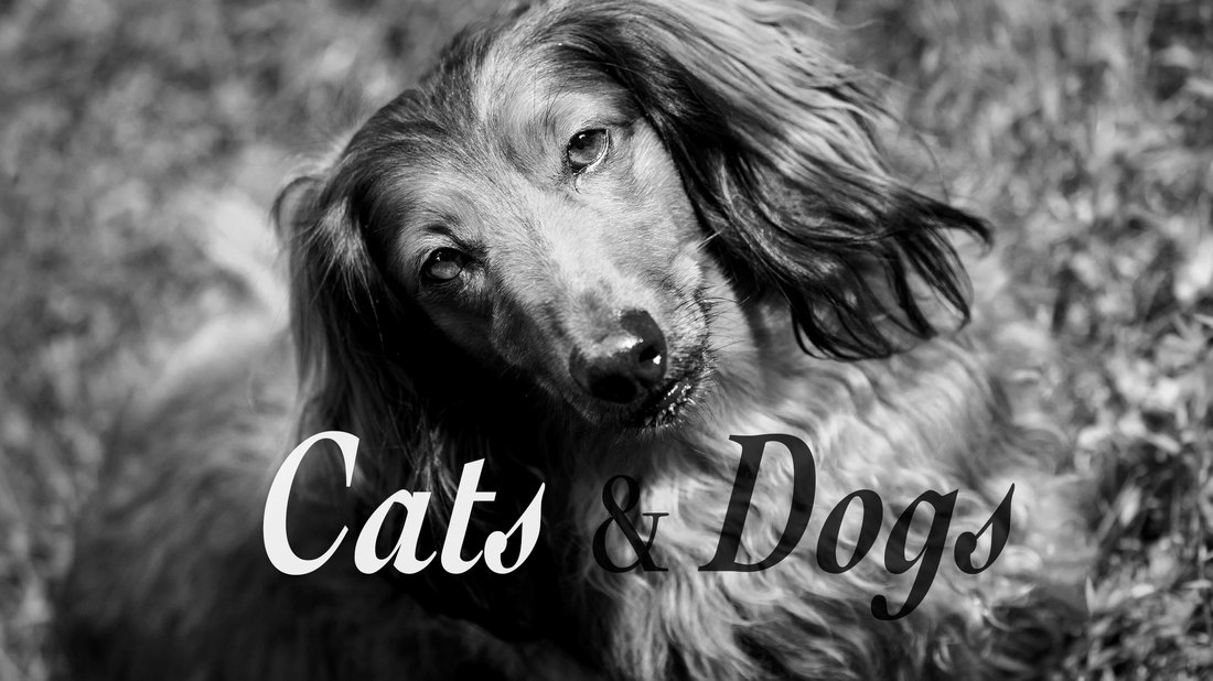 Cats & Dogs Photography