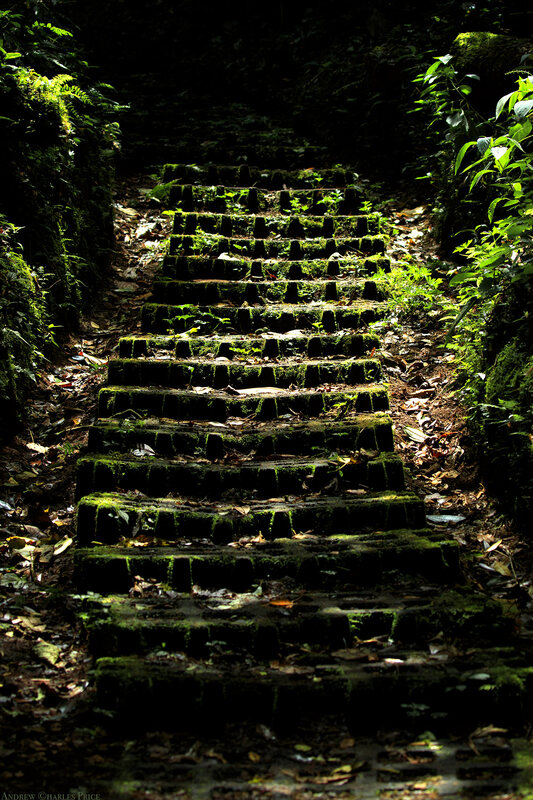 Costa Rica Cloud Forest Stairs