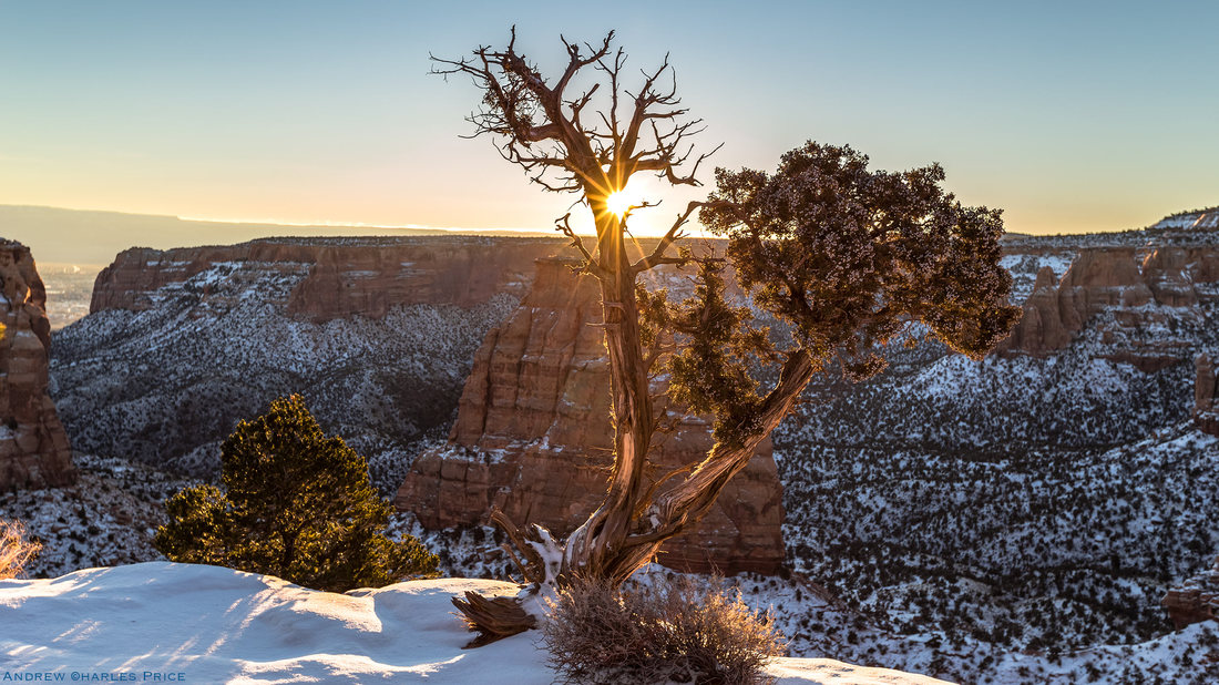 Colorado Monument Sunrise Tree